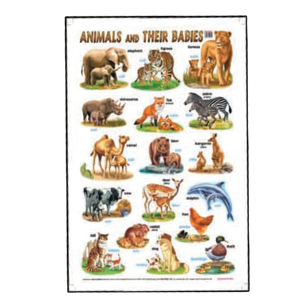 Educational Chart Animals and Their Babies (MM01621)